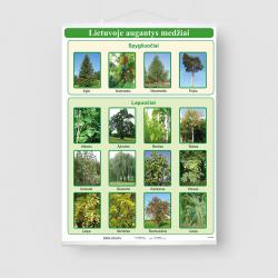 Lietuvoje augantys medžiai