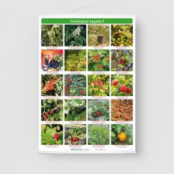 Vaistingieji augalai I