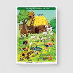 Zwierzęta domowe i drób
