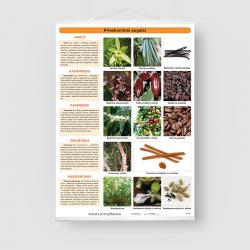 Prieskoniniai augalai I