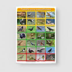 Paukščių garsų pamėgdžiojimai