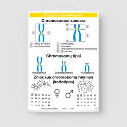 Žmogaus chromosomos