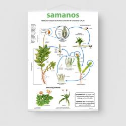 Samanos
